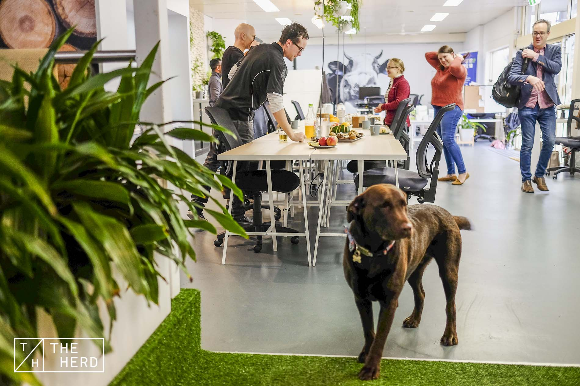 Pet-friendly Coworking space with a brown dog meeting rooms in gippsland